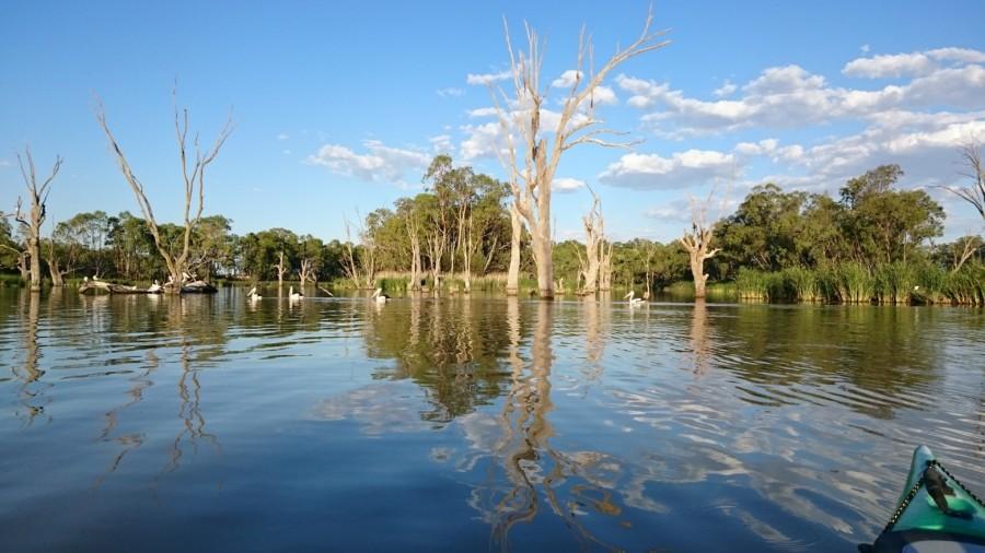 Murray River - kayak tour.