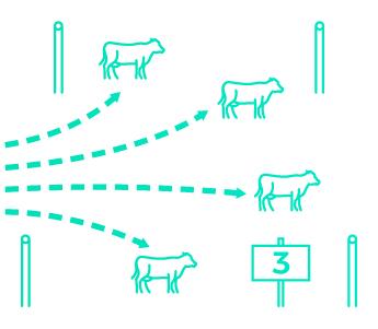 Paddock 3.jpg