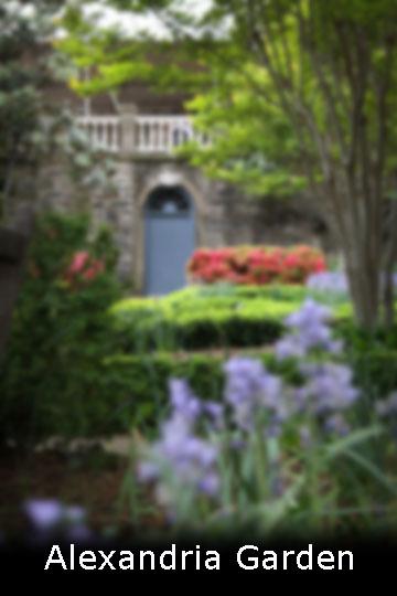 Alexandria Garden web.jpg