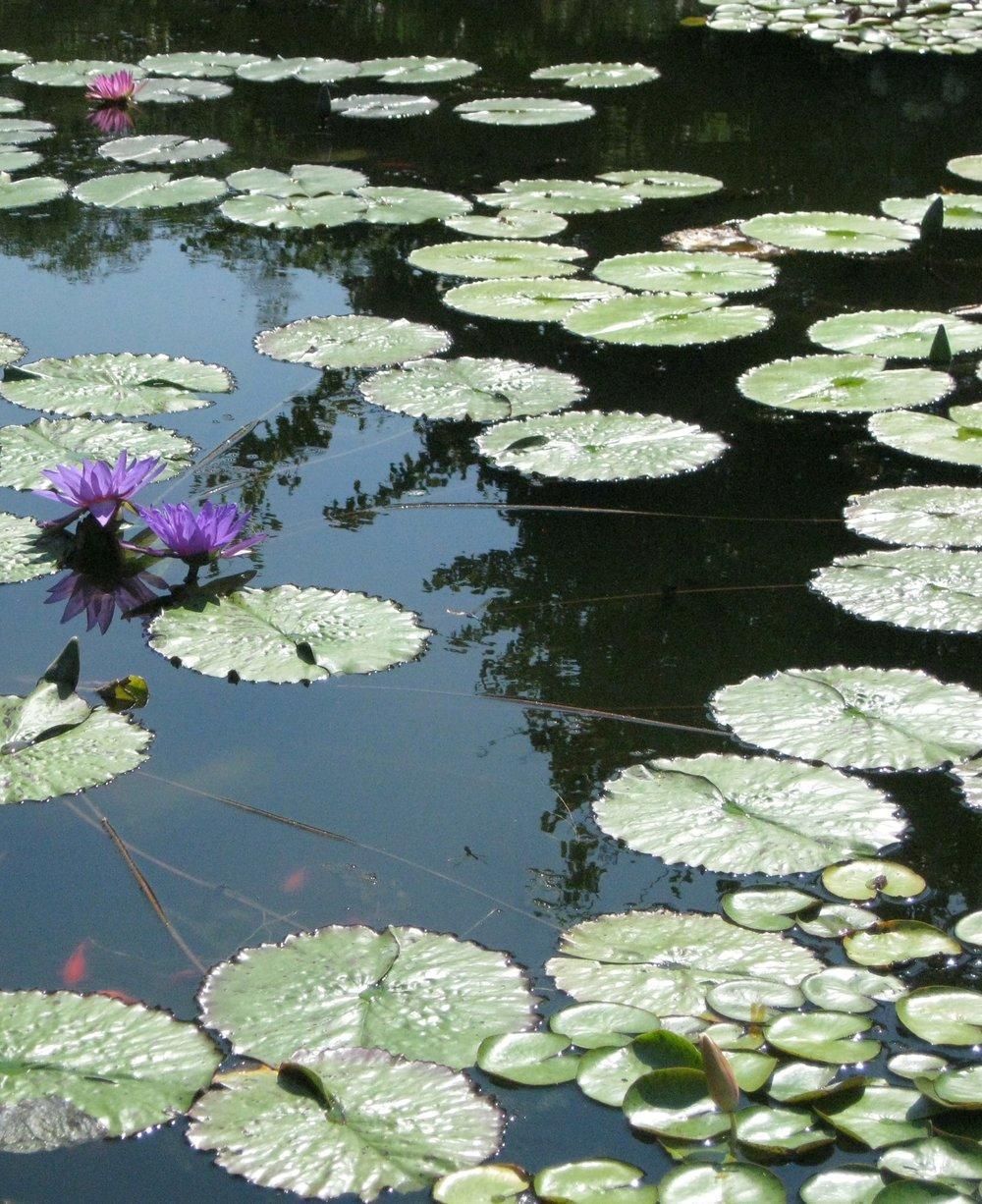Lillies cropped IMG_0553.jpg
