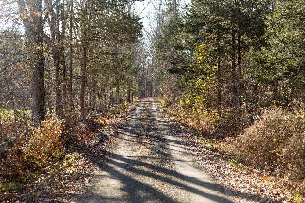 A Rural Lane