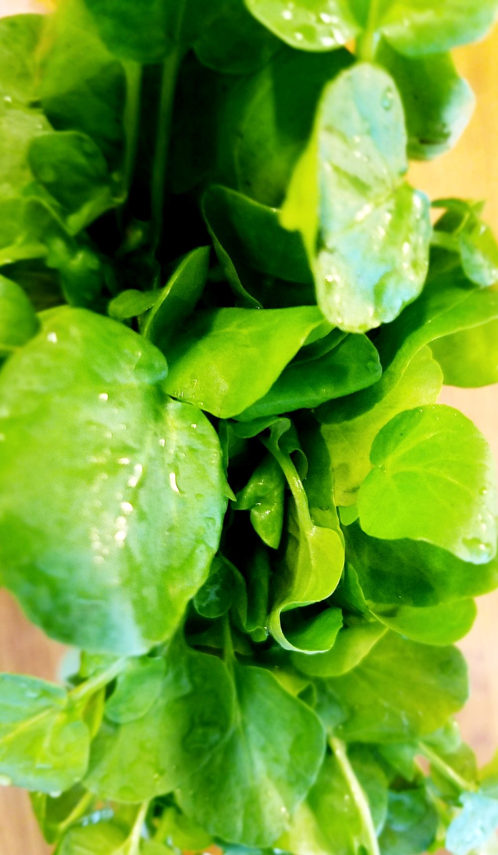 A fresh rinsed bunch of watercress