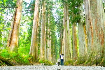 TOGAKUSHI - Mount Togakushi lies a mere 20 kilometers north-west of Nagano city. Standing 1,904m tall and covered in ancient forest, it is perhaps most well known for the Togakushi Shrine located in the foothills.