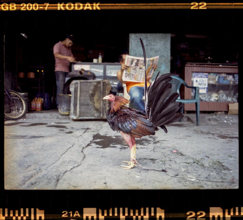 Kodak Gold 200 - 021.jpg