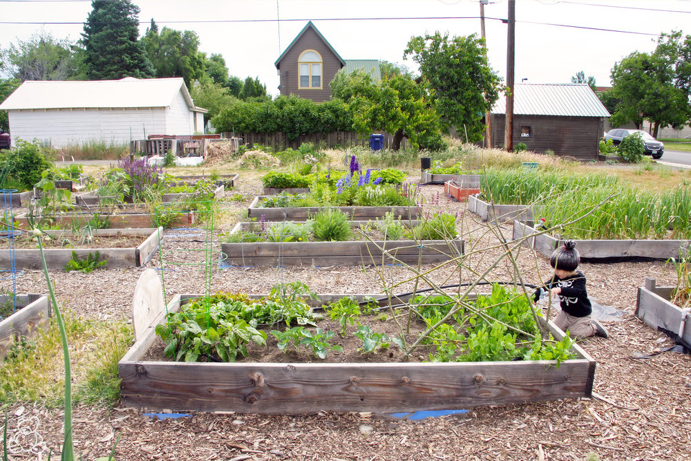 Jonas at the Ellensburg Downtown Community Garden, 2017