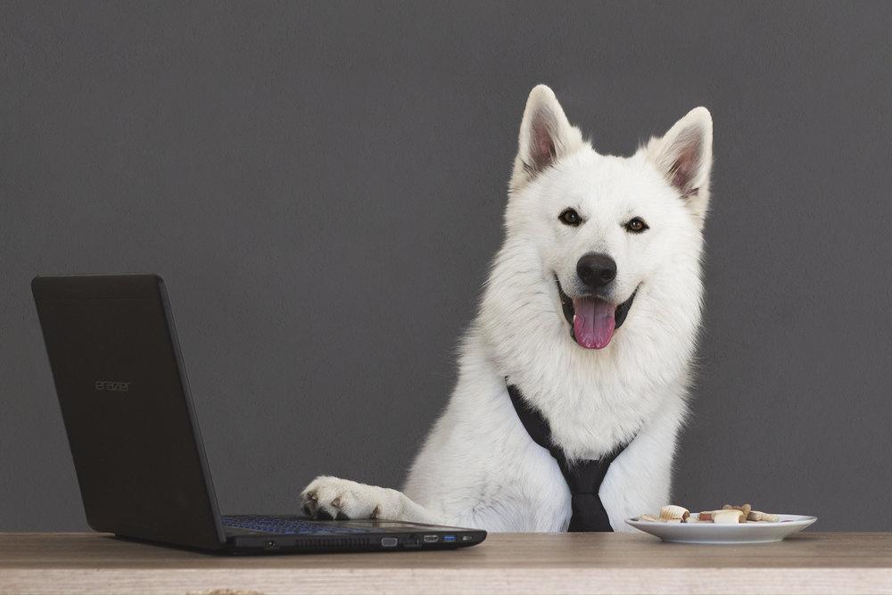 Büroassistenzhund_Laptop03_web.jpg