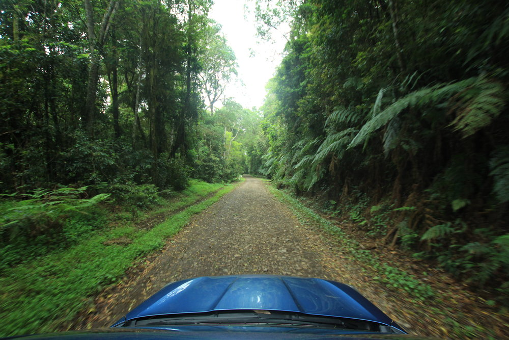 Road tripping through the Border Ranges National Park.