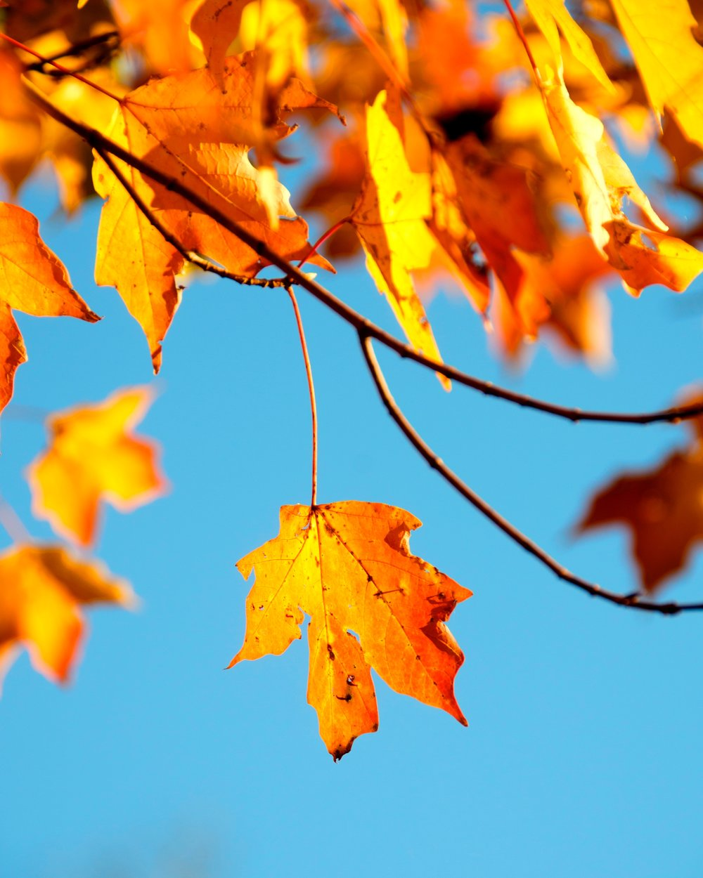 Autumn Hot Offer   From £109 per room for two nights & a bottle of fizz   Book Now