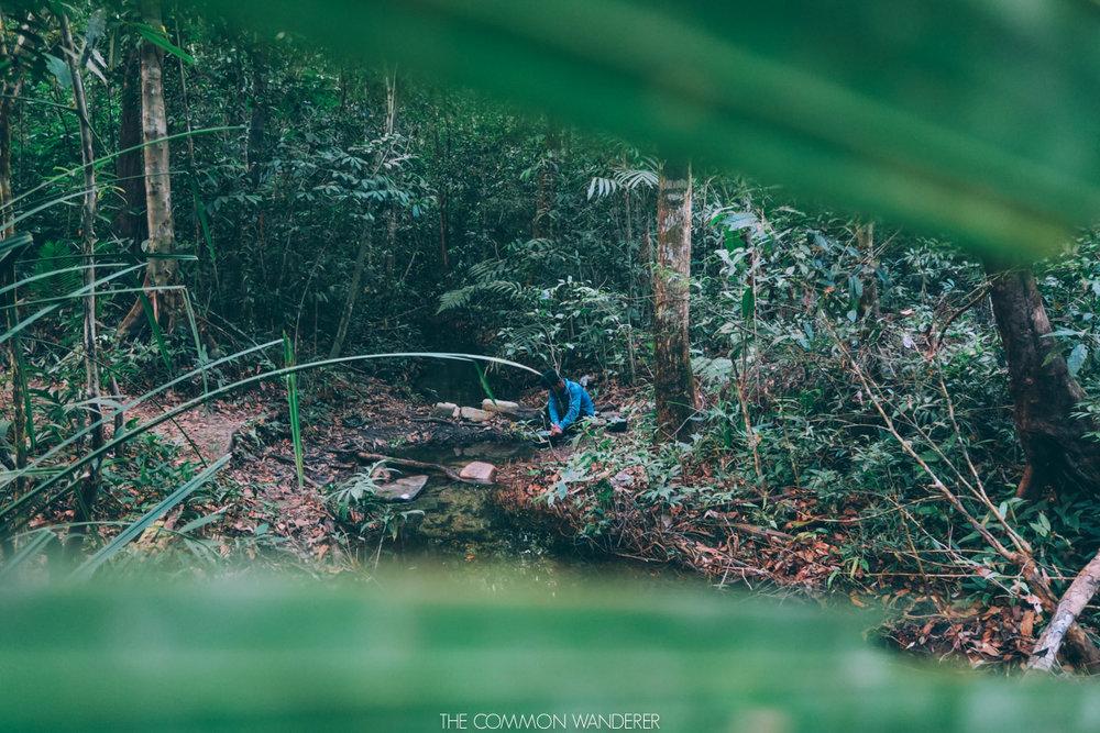 Cardamom mountains jungle, Cambodia