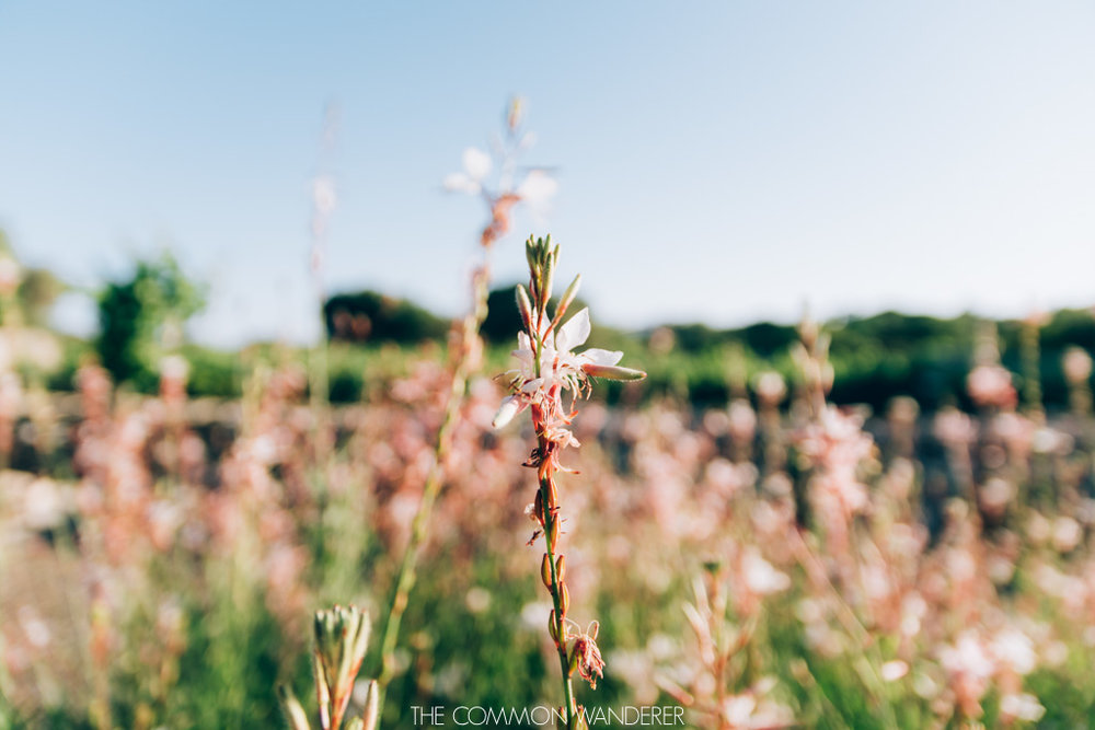 flowers and bodegas binifadet, Menorca