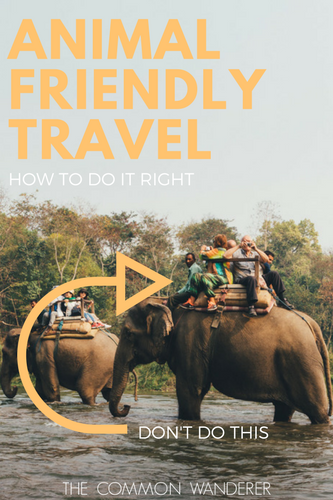 In this day and age, being naive to animal cruelty is no excuse. Here's our easy to follow guide on how to be an animal friendly traveller.
