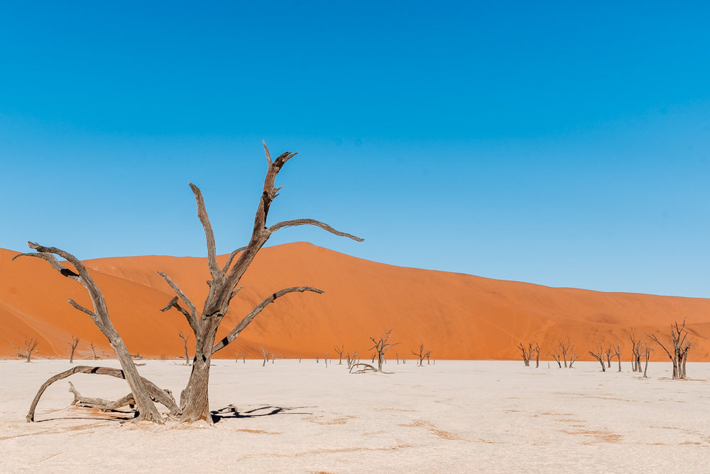 the fossilised trees of Deadvlei Namibia