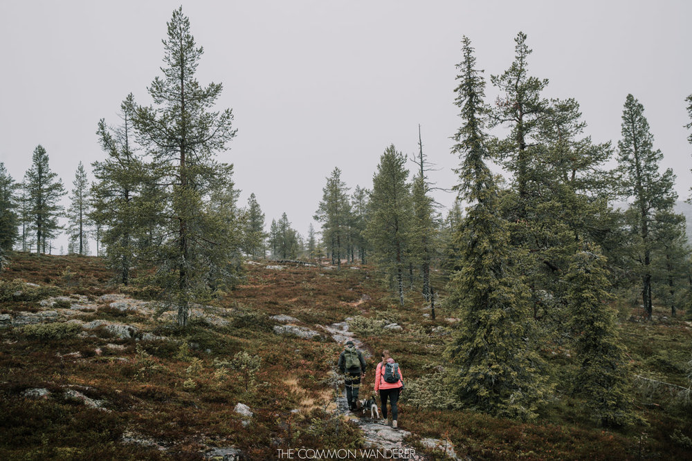 things to do in Swedish Lapland - The Common Wanderer