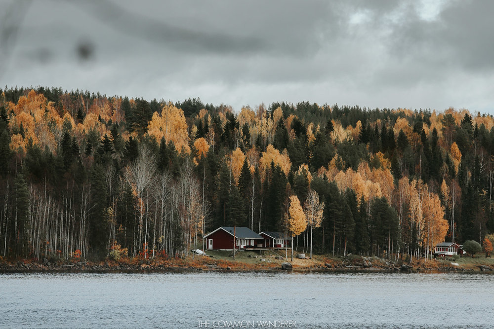 things to know before visiting Swedish Lapland - the autumn colours
