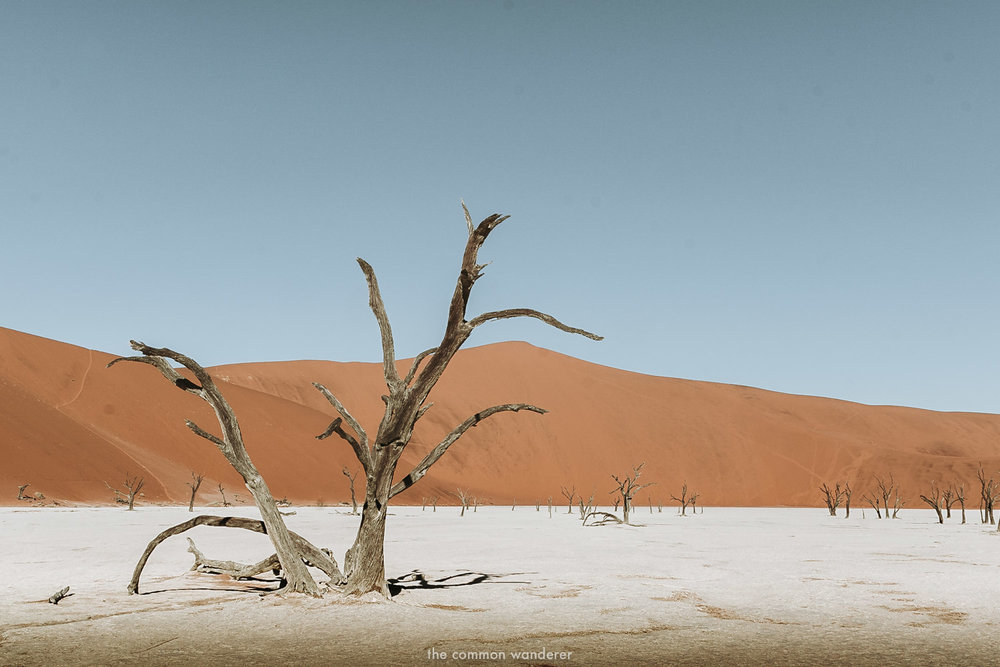 Deadvlei clay pan in Sossusvlei, Namibia