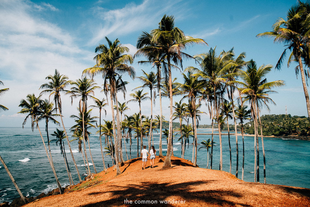 Coconut palms of Mirissa - Best things to see and do in Sri Lanka