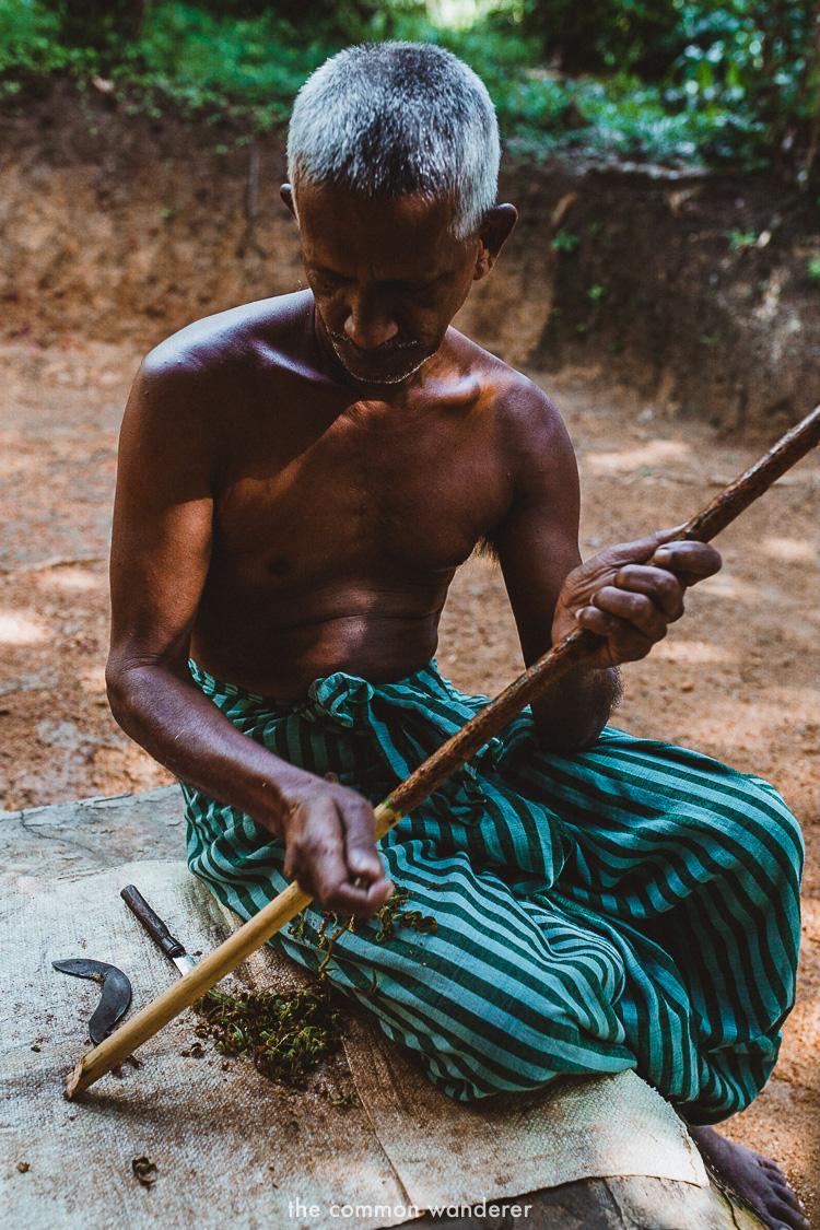 Cinnamon making process on cinnamon island, Koggala Lake