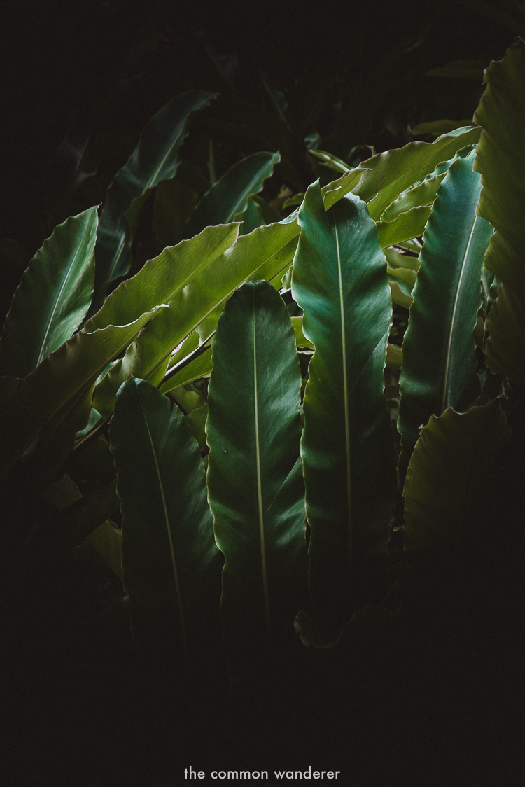 Sunlight illuminating the green plants at Tri hotel, sri lanka