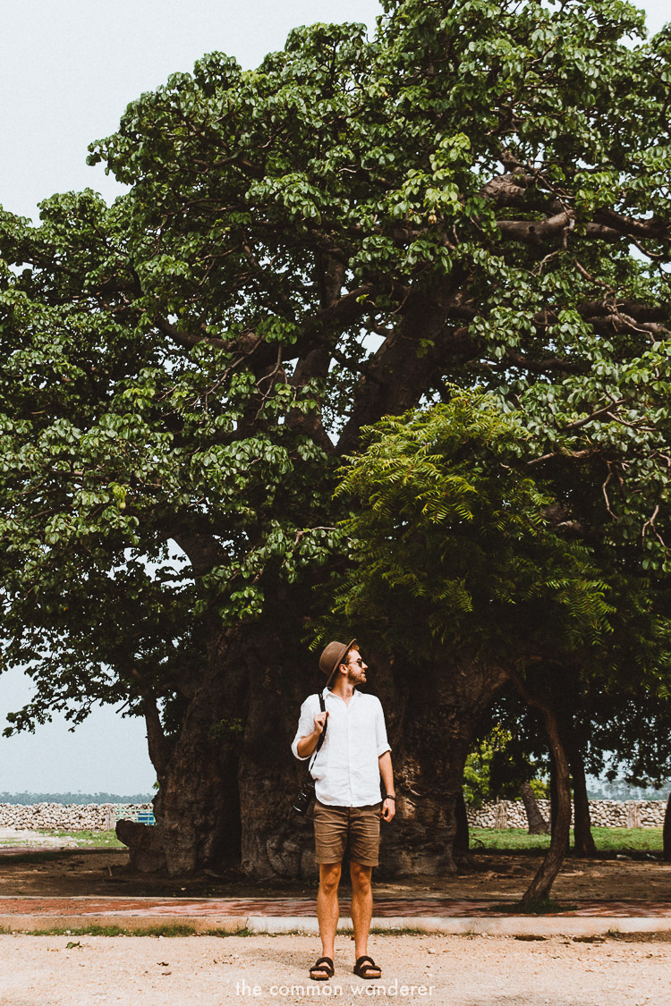 Standing under the Boabab tree on Delft Island | Delft island travel guide