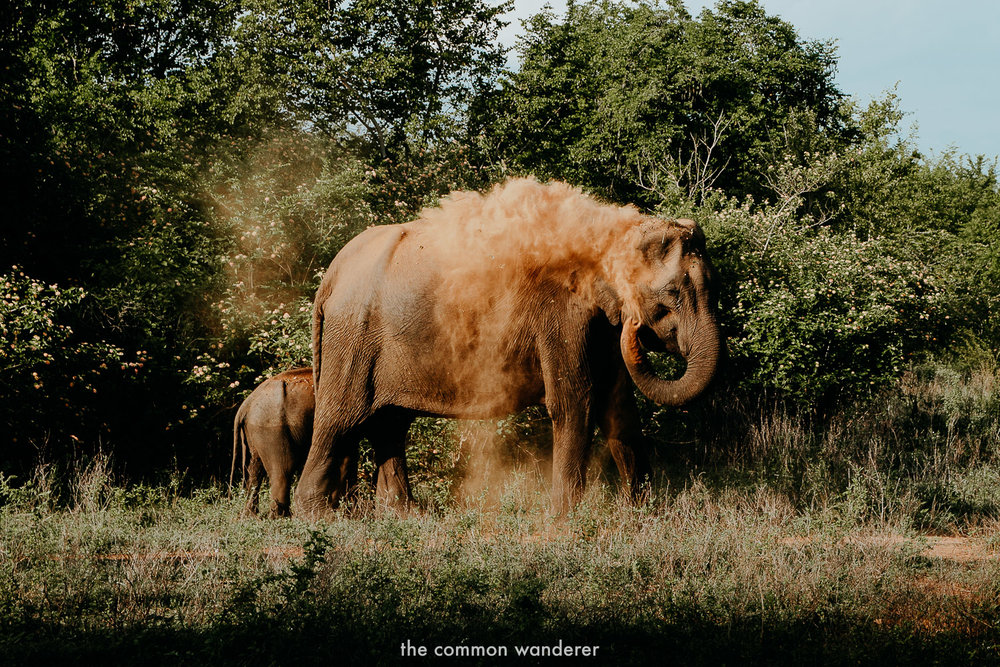 Sri Lanka highlights - Leopard and elephant spotting in Yala National Park