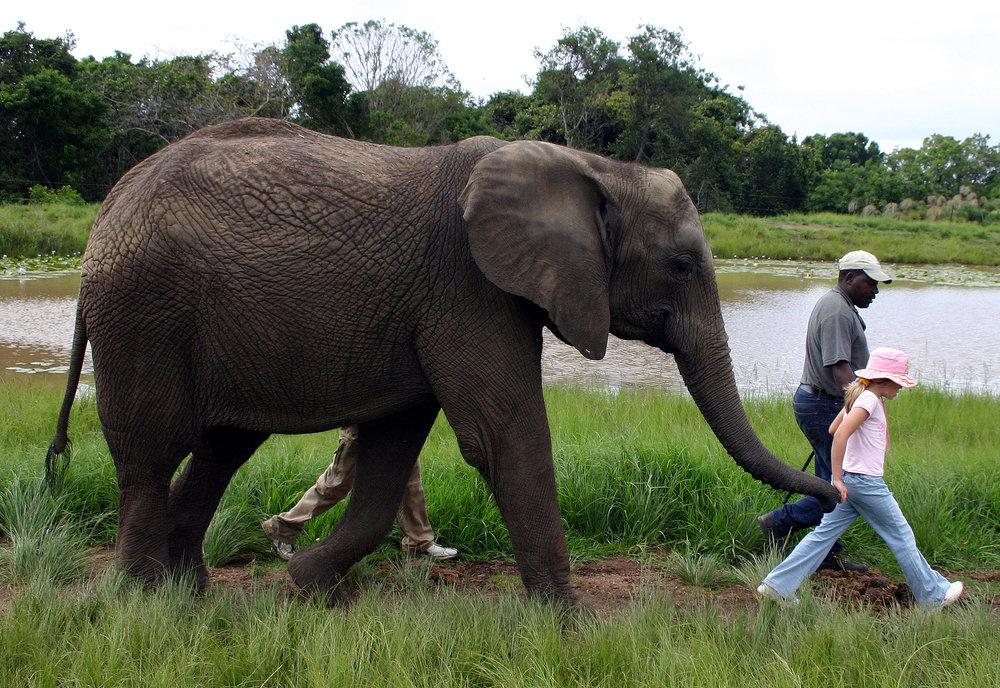 The Elephant Sanctuary - Photo by http://www.elephantsanctuary.co.za/