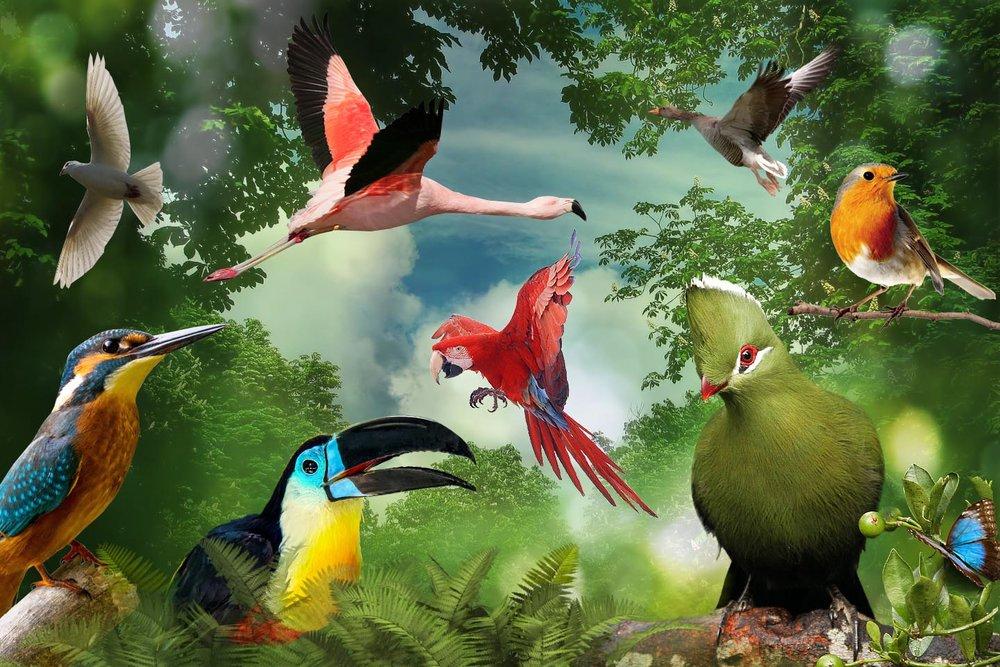 Birds of Eden - Photo by http://www.birdsofeden.co.za/