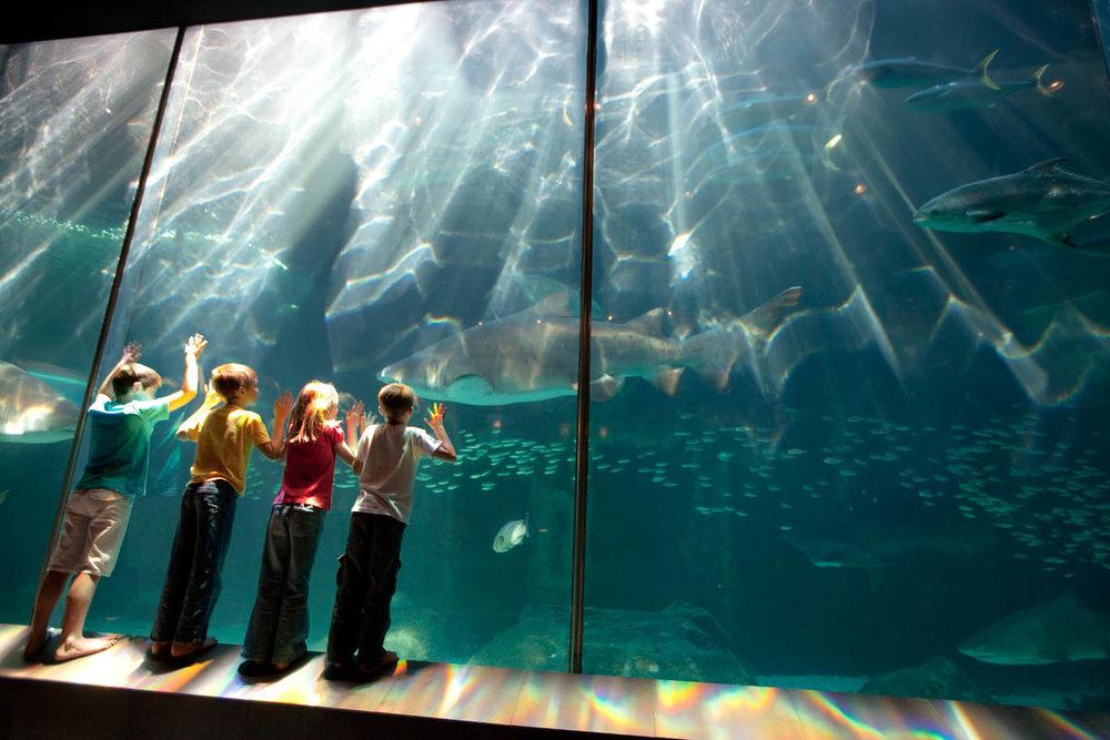Two Oceans Aquarium - Photo by: https://www.aquarium.co.za/