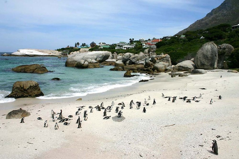 Penguins at Boulders Beach - Photo by:  Wikipedia