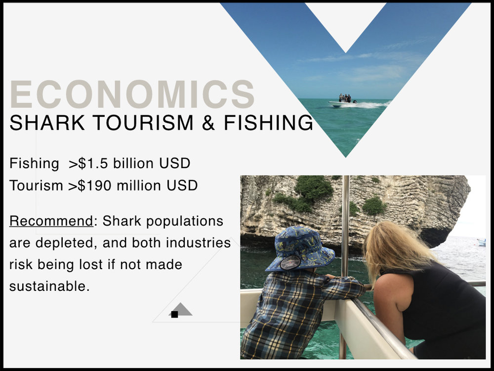 Shark_Economics.jpeg