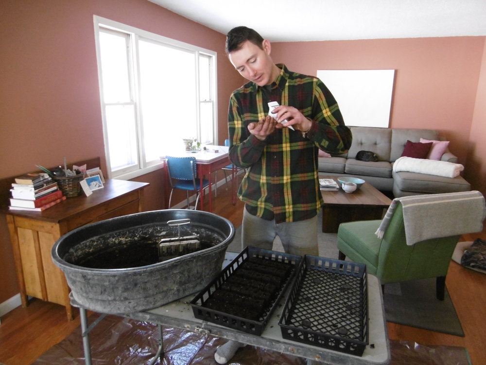 sowing kale seeds in the living room