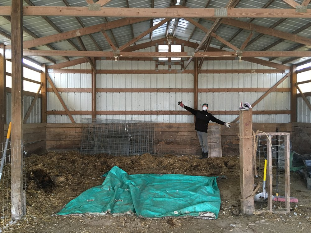 Barn cleaning, end of March