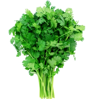 Product of the Week⇣ 8% - This week coriander (cilantro) 12/24 counts prices fell across all our suppliers. Take advantage of the price drop!Given the recent occurrence of Hurricane Michael, some items have increased drastically in sales due to a shortage. If you're feeling savvy, look for opportunities to replace green zucchini with yellow while prices stabilize.