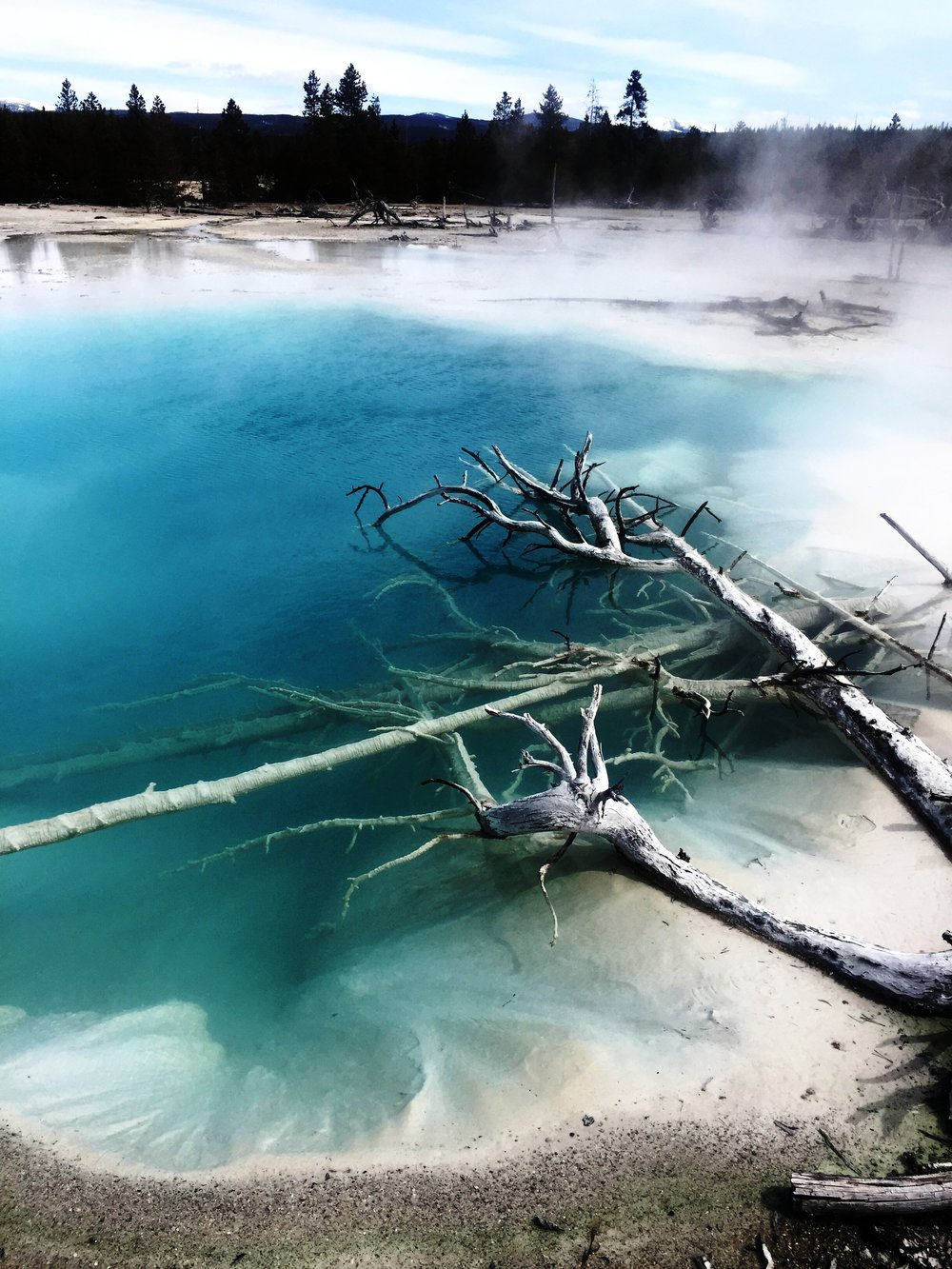 Norris Geyser Basin 2017