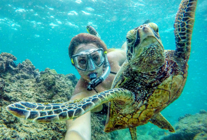 Hawaii_snorkeling_with_turtles.jpg
