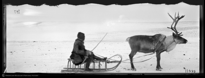 """Tundra Yukaghir on sled pulled by reindeer, Siberia, 1897–1902,"" ID: 11099. Courtesy of American Museum of Natural History Library http://images.library.amnh.org"