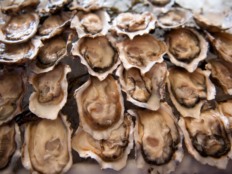 "RAPPAHANNOCK RIVER OYSTERS   The following is placeholder text known as ""lorem ipsum,"" which is scrambled Latin used by designers to mimic real copy. Mauris    Salinity ;  Light Salt"