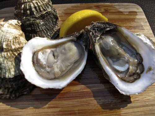 "GULF OYSTERS   The following is placeholder text known as ""lorem ipsum,"" which is scrambled Latin used by designers to mimic real copy. Aliquam bibendum, turpis eu .    Salinity ;  Sweet"