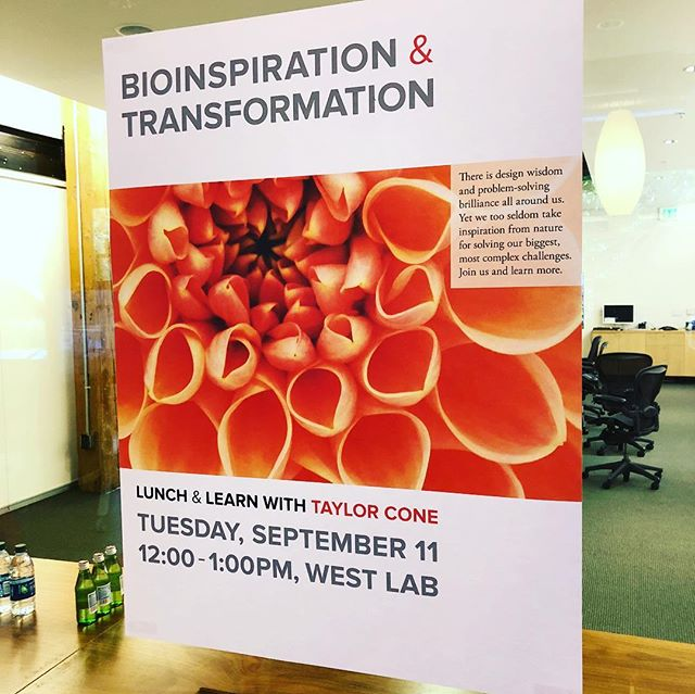 Grateful for the opportunity to speak at @sypartners this afternoon for a Lunch & Learn on #Bioinspiration & #Transformation! Such a gift to spend time with the SYP team. • I shared my thoughts on #behaviorchange and #culturechange through the lens of emergence - simple low-level rules leading to higher-level sophistication. • My primary question: How might we leverage emergence to cultivate cultures of experimental innovation and creative collaboration? • More specifically: How might we develop as few and as simple rules as possible (to guide individual behavior) that will result in desirable macro behavior (i.e. organizational behavior)? • Curious? Intrigued? Let's chat! Comment, DM, or email and let's explore the topic together. • #experimentalinnovation #creativecollaboration #design #innovation #leadership