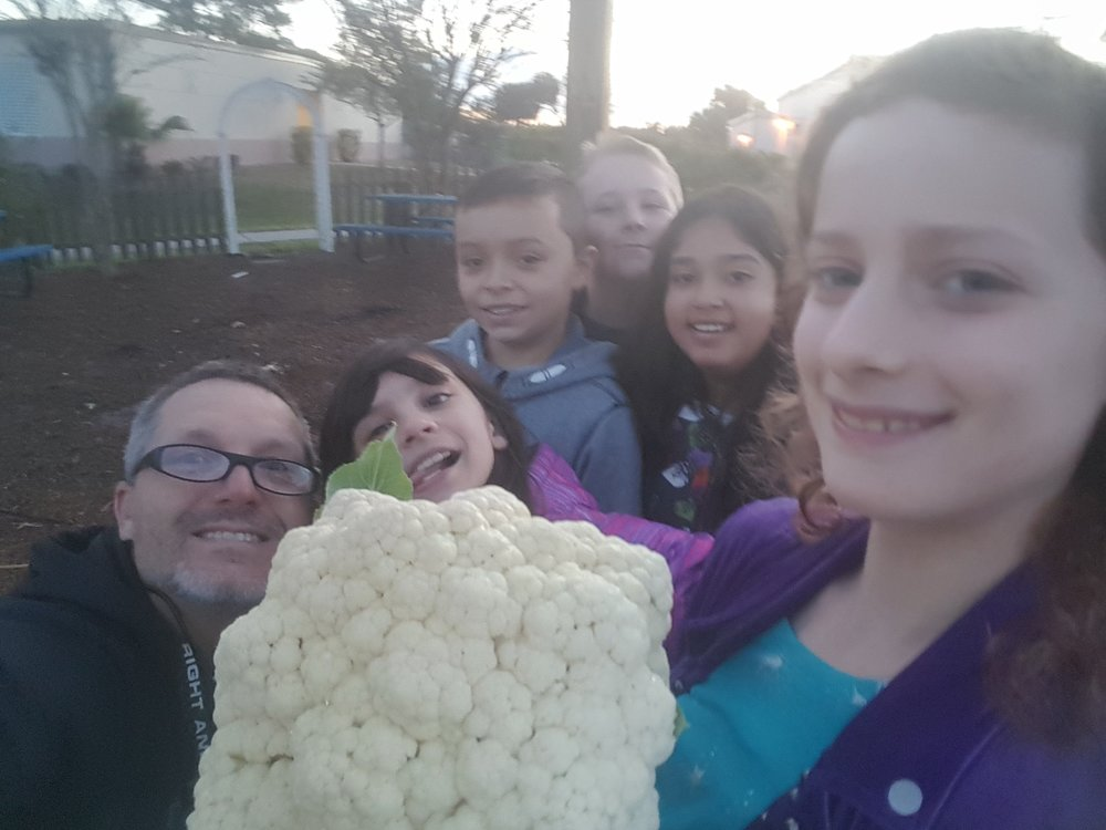 Mark and his students check the rapidly growing cauliflower they are growing in the school garden.
