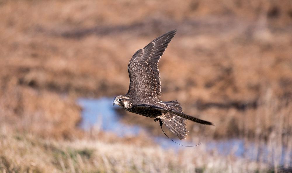 01.20.18.hawks.falcons.0029.jpg