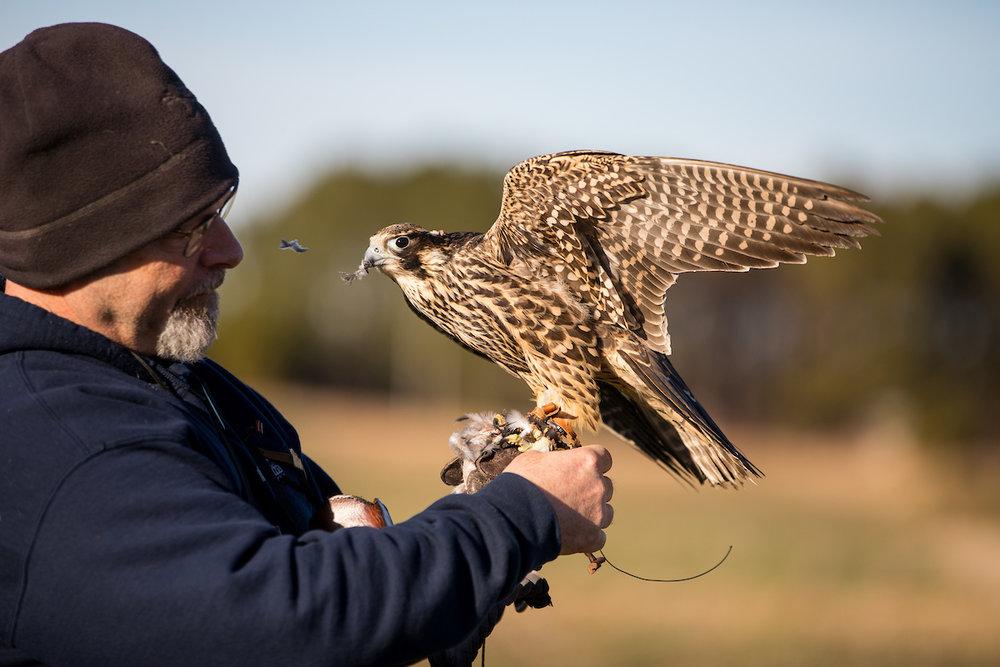 01.20.18.hawks.falcons.0081.jpg