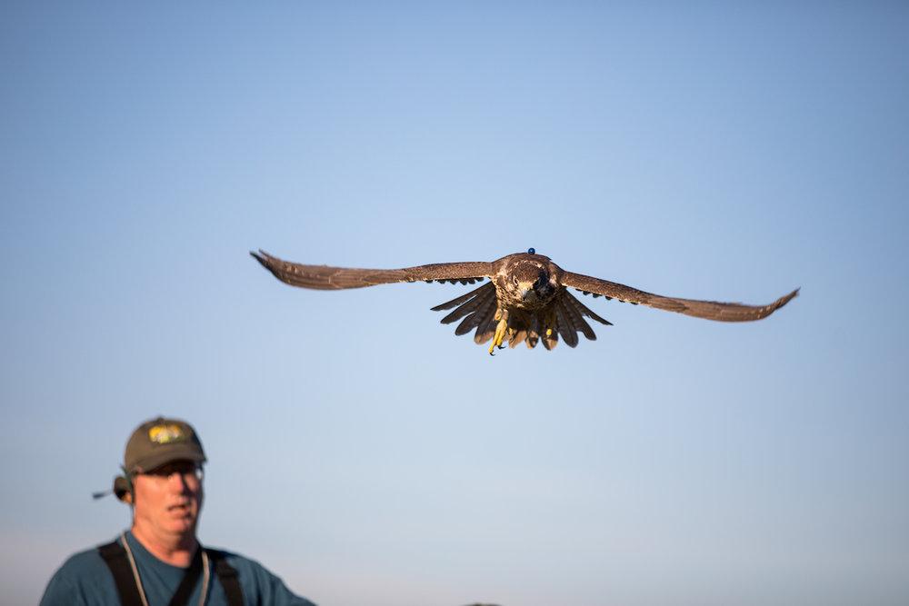 01.20.18.hawks.falcons.0098.jpg