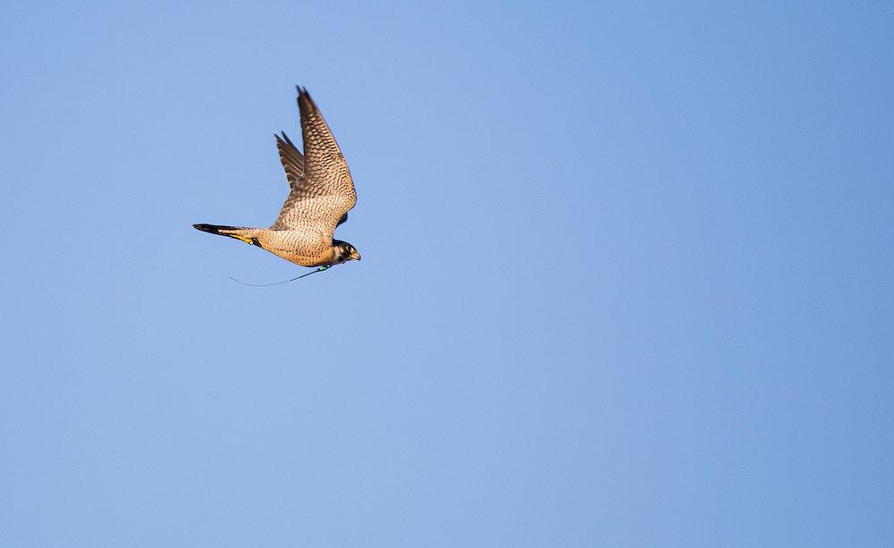 01.20.18.hawks.falcons.0183.jpg