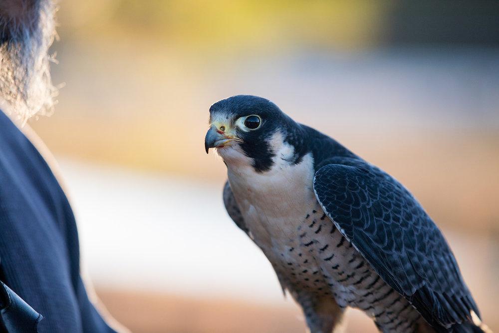 01.20.18.hawks.falcons.0203.jpg