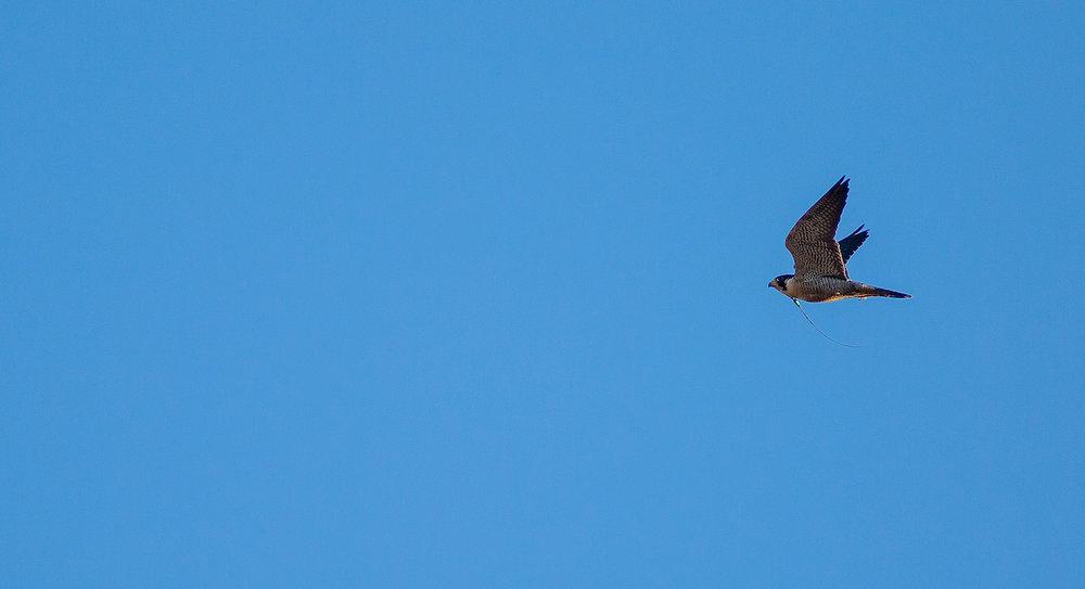 01.20.18.hawks.falcons.0844.jpg