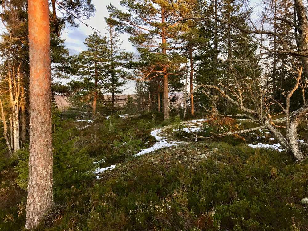 Typical forest outside Oslo, in the area where this tour is arranged (Photo: Oslo Outdoor)