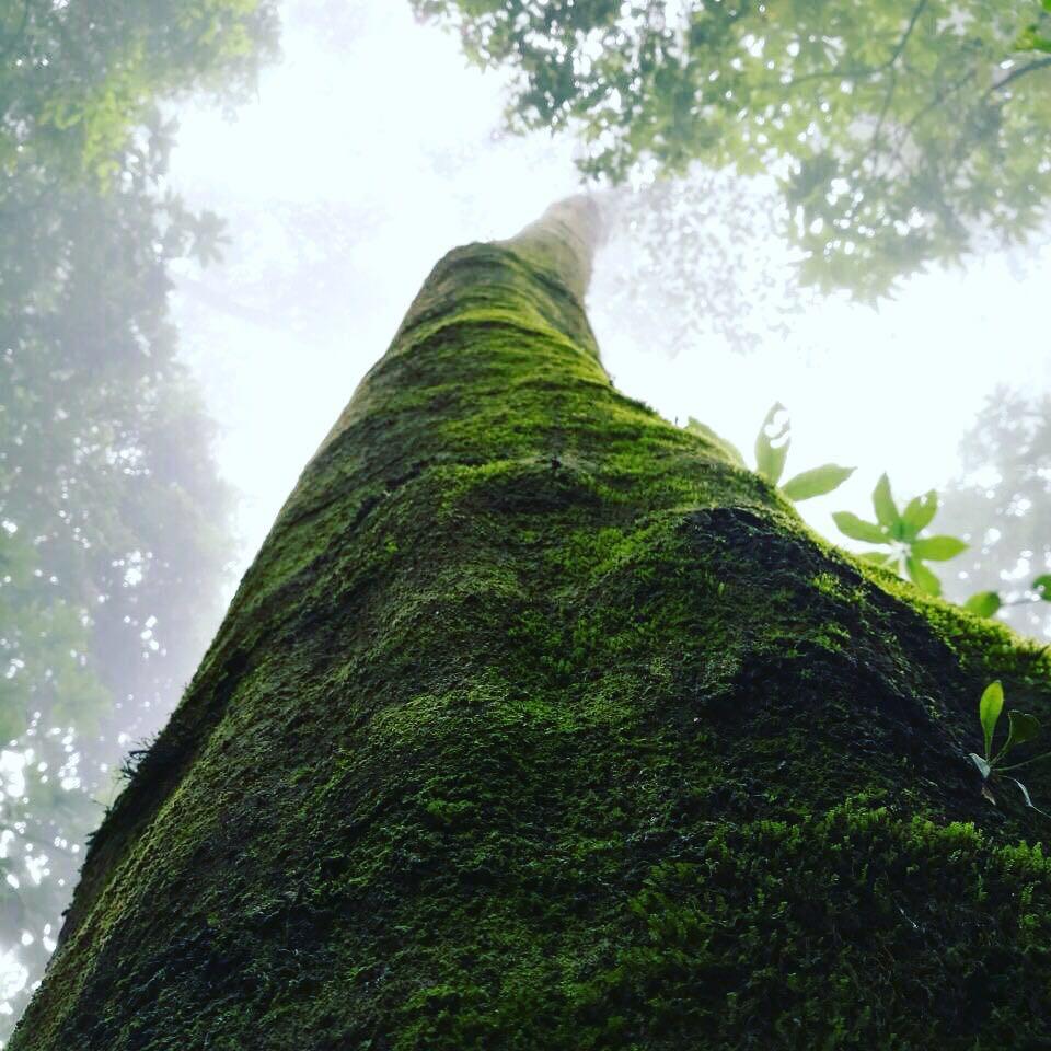 Long Tree.jpg