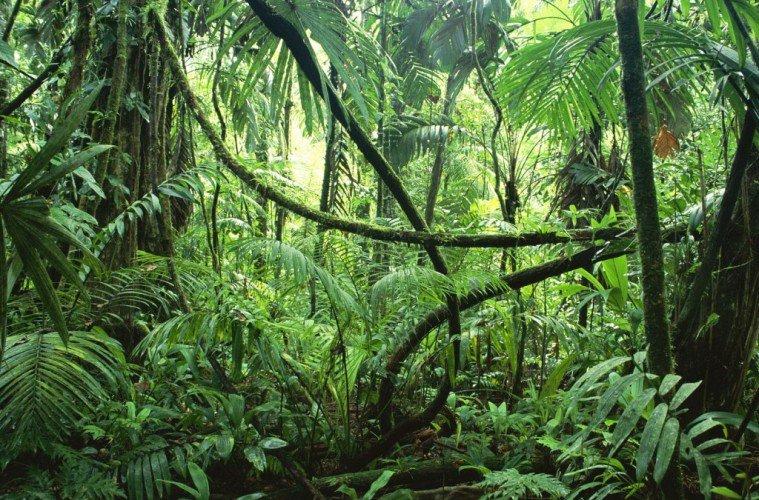 Brazil Rainforest.jpg
