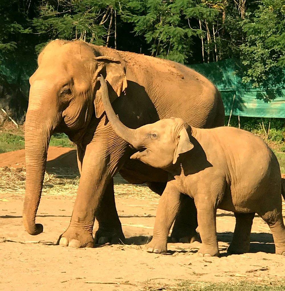 Elephant 01.jpg