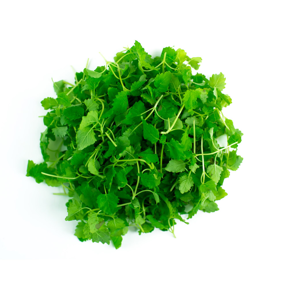 Lemon Balm Microgreen